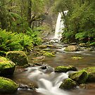 Hopetoun Falls - Otway ranges by Tony Middleton