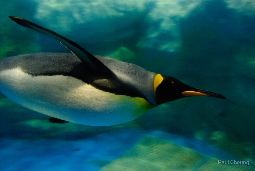 swimming penguin by Paul Cheung