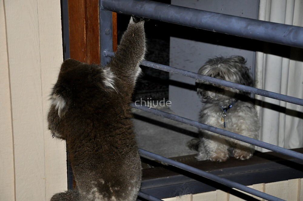 A Close Encounter of a Koala Kind by chijude