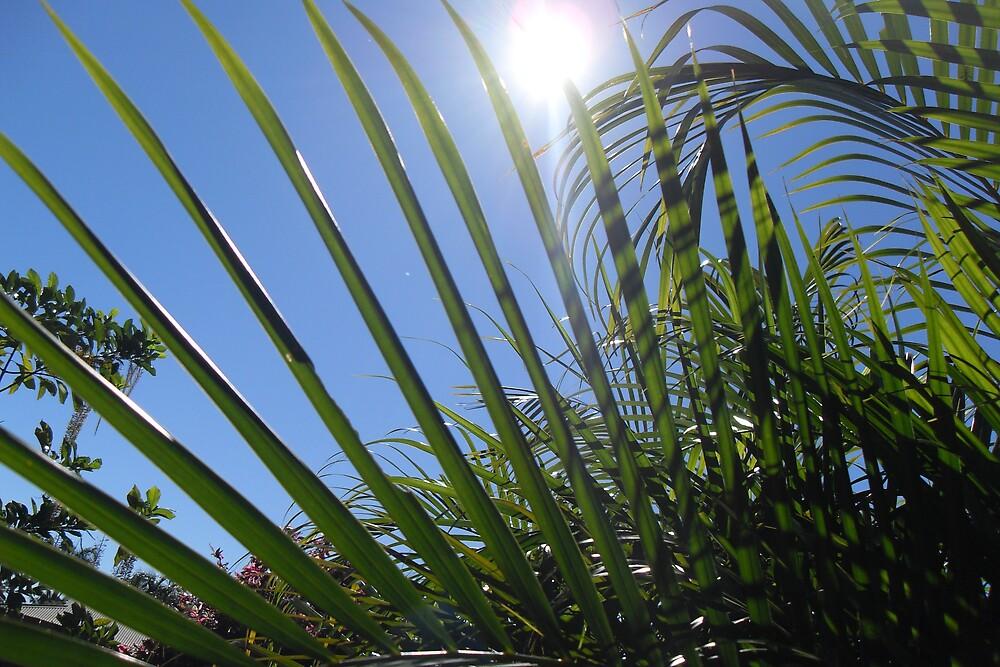 palm by roam