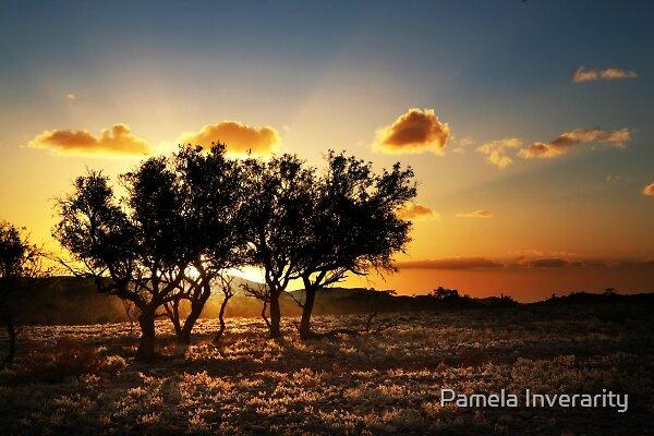 Radiance by Pamela Inverarity
