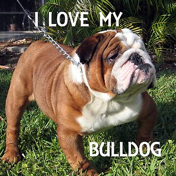 bulldog red and white love with picture by marasdaughter