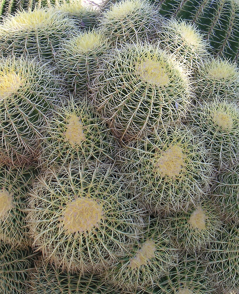 Cacti by KeithGall