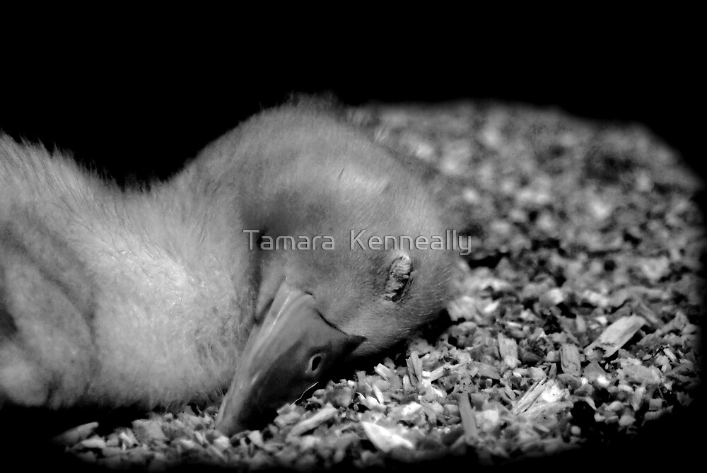 Little One by Tamara  Kenneally