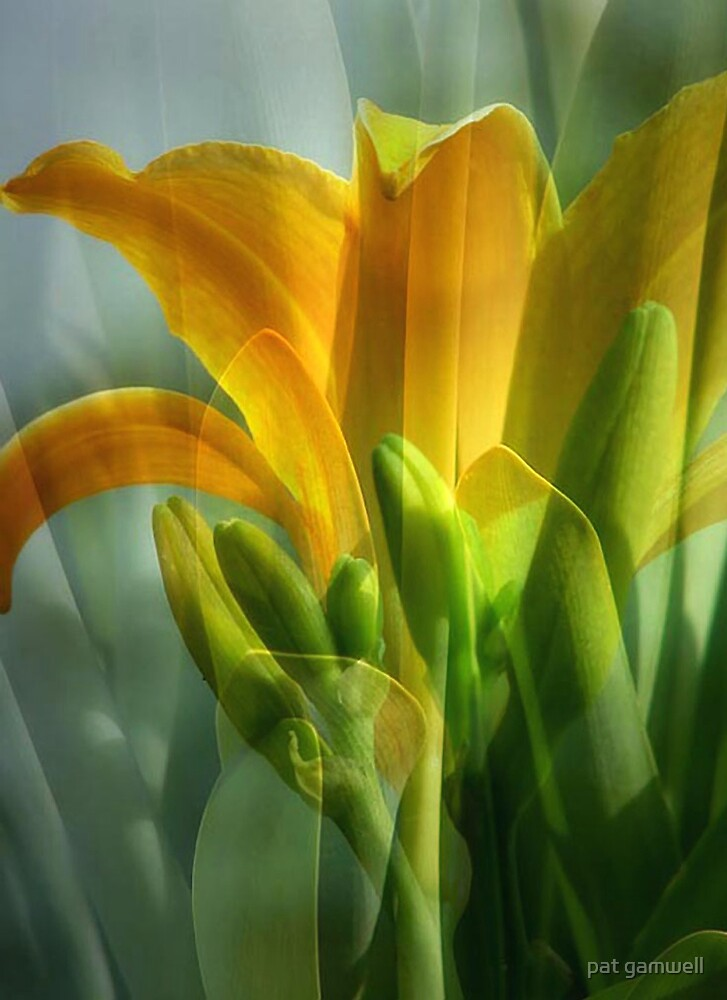 From Bud to Blossom by pat gamwell