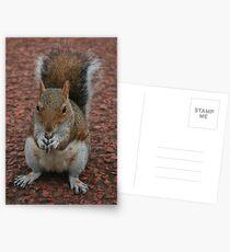 Squirrel At Royal Botanic Gardens, Edinburgh Postcards