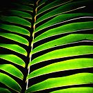 Fern abstract 2 by scottsphotos