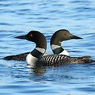 Loon love (video of this in description) by Heather King