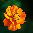 Cosmos 2018-1 by Thomas Young