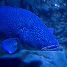 Animal Portrait - Fish by Wolf Sverak