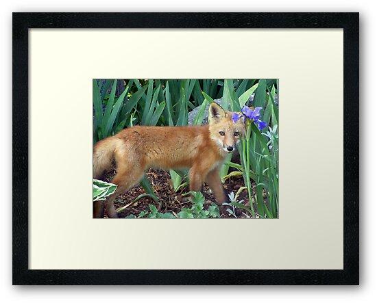 Fox Kit by Leeanne Middleton