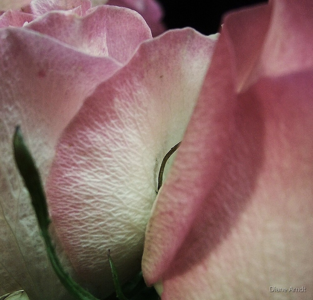 Pink Folds by Diane Arndt