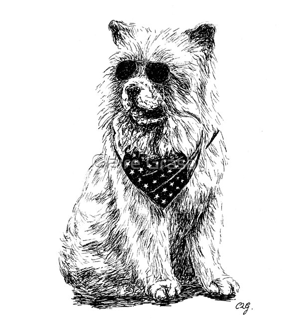 Cool Chow Chow (Pen Drawing)  by clgcreativearts