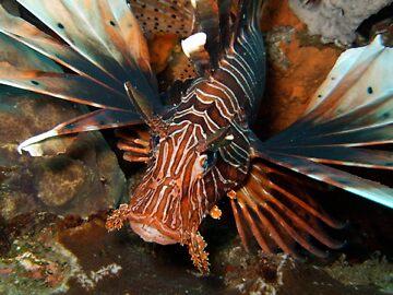 Lion-fish  by James Parker