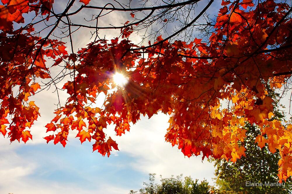 Autumn Shine  by Elaine Manley