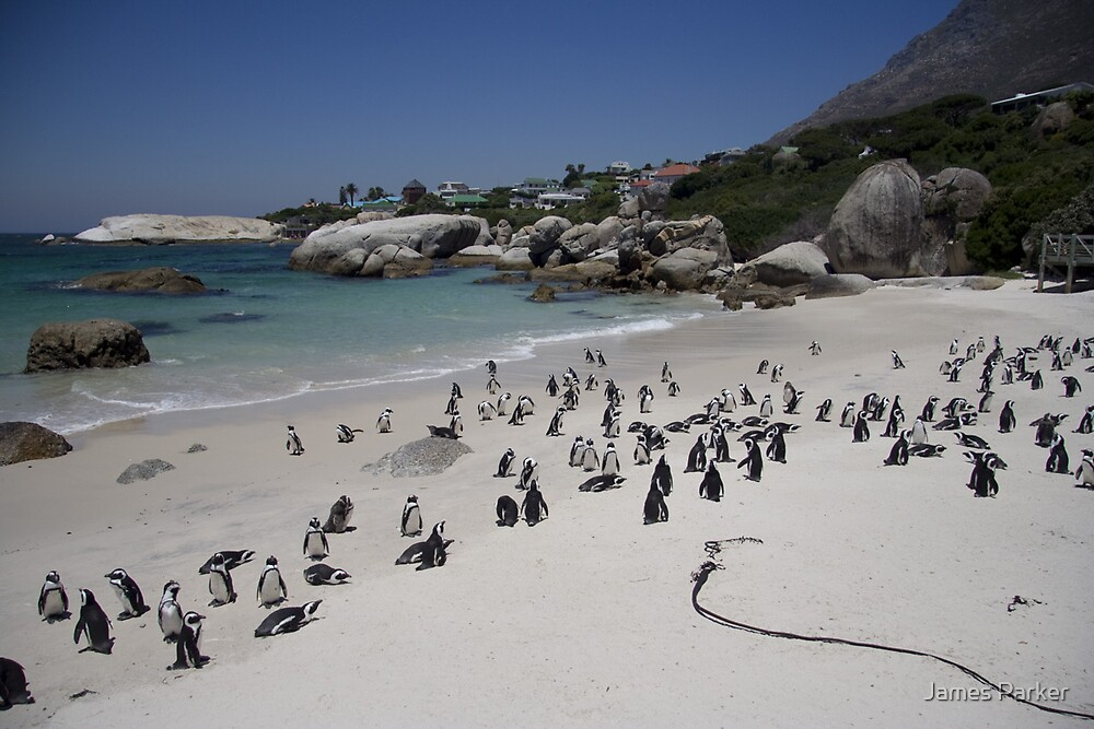 Boulders beach, South Africa  by James Parker