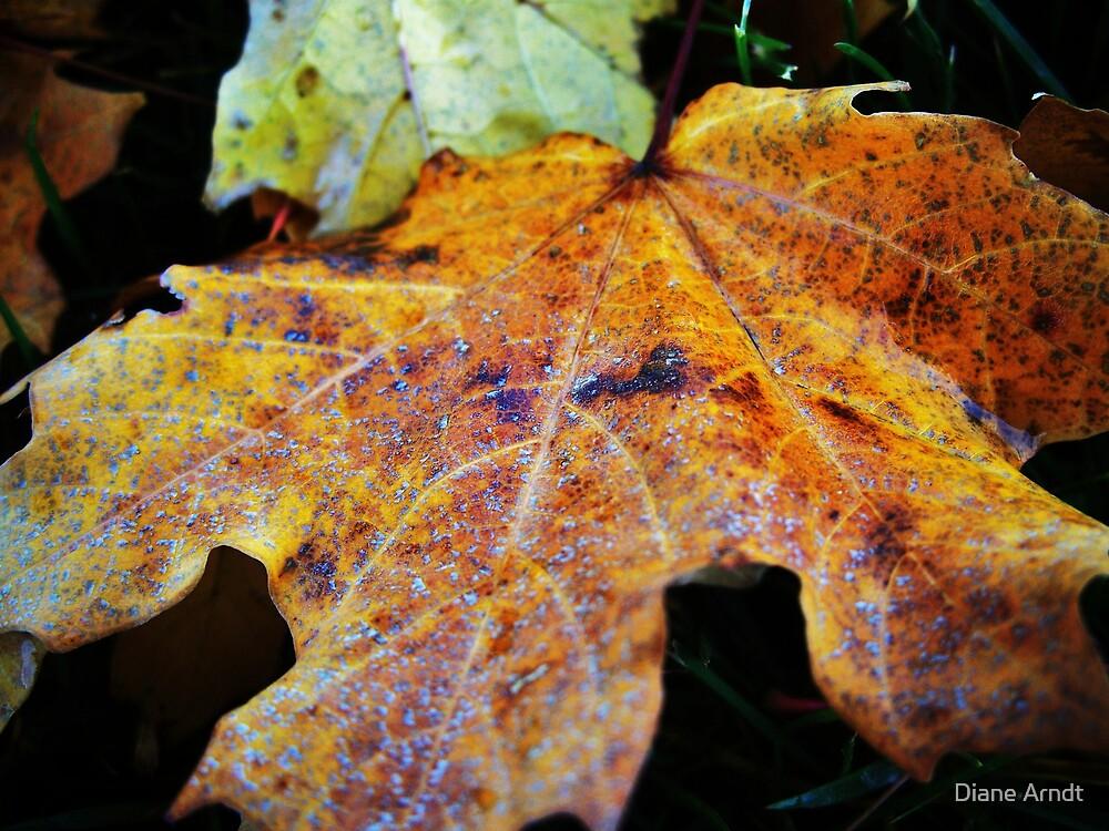 Turning Leaf by Diane Arndt