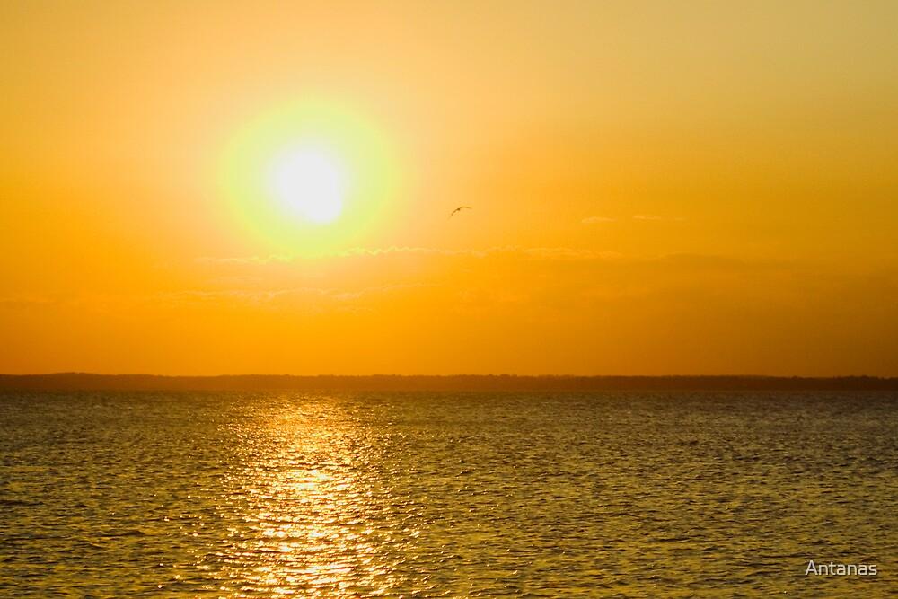 Sun way by Antanas