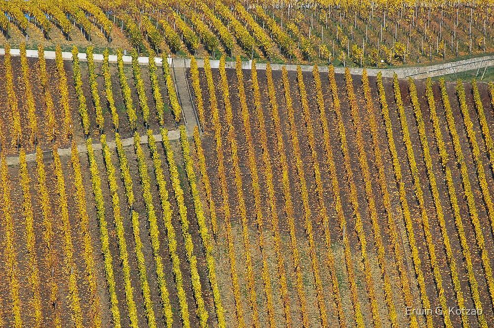 vineyard #1 by Erwin G. Kotzab