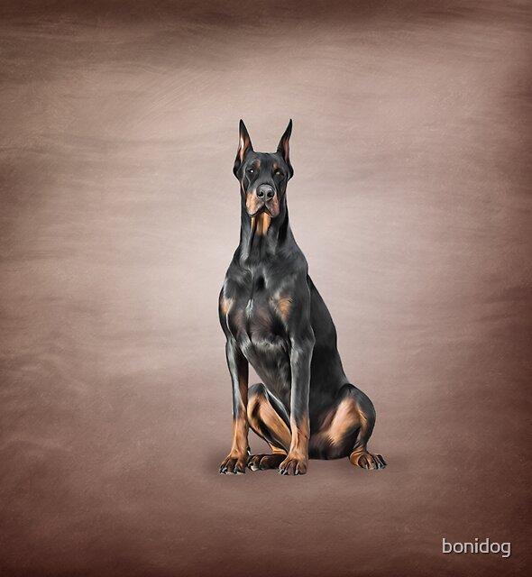 Drawing Doberman dog by bonidog