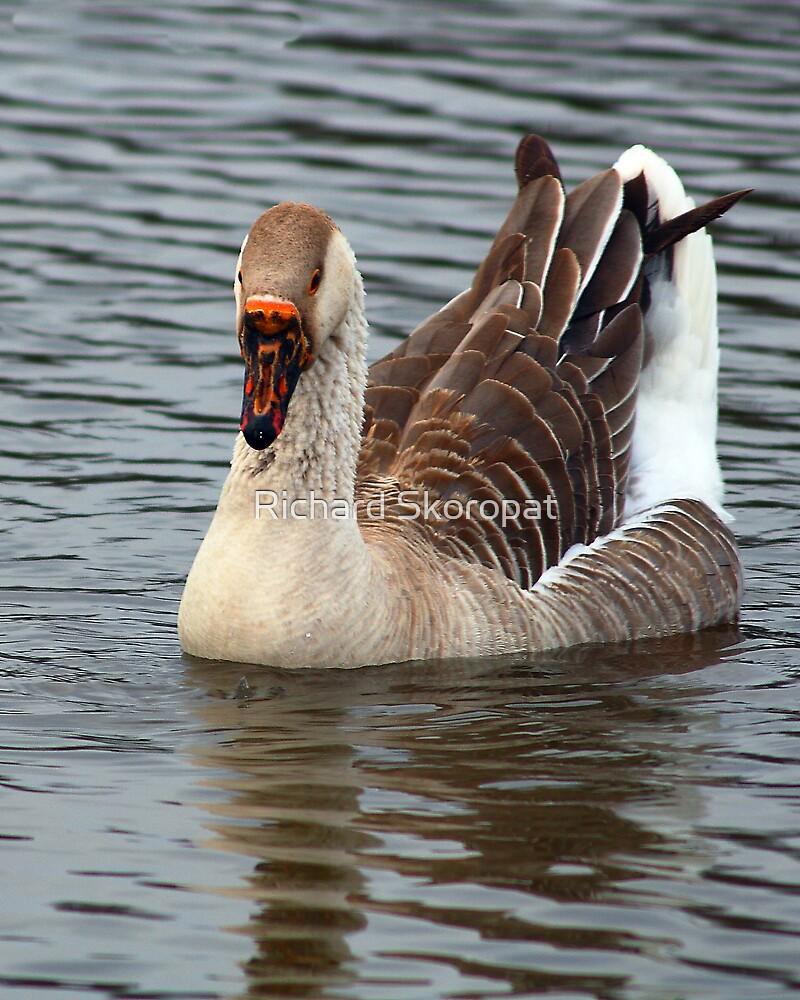 Goose on the Lake by Richard Skoropat