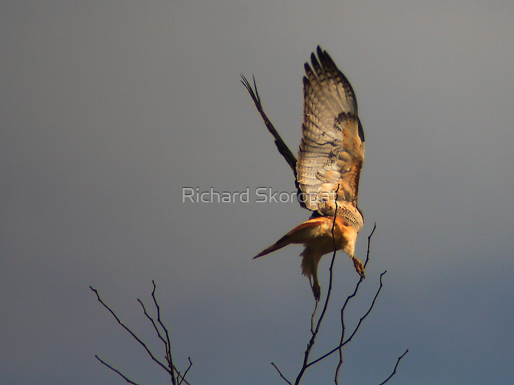 Hawk After It's Prey by Richard Skoropat