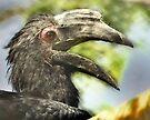 Von der Decken's Hornbill  by LudaNayvelt