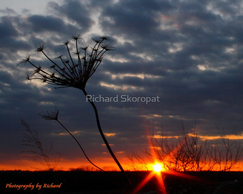 Sunset Weed by Richard Skoropat