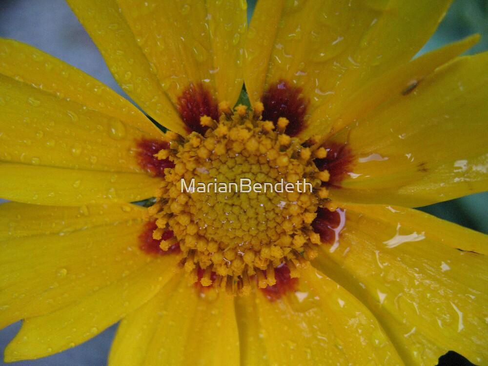 Yelp'n Yellow! by MarianBendeth