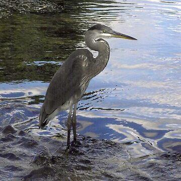 Green Heron Minneapolis Minnesota by TScottAdams