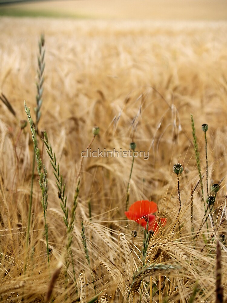 Memories of summer's passings by clickinhistory