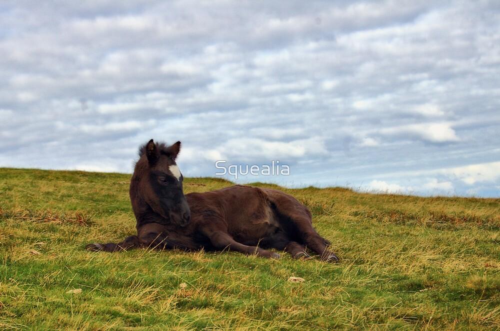 Dartmoor foal by Squealia