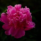 Really Pink by Sandy Keeton