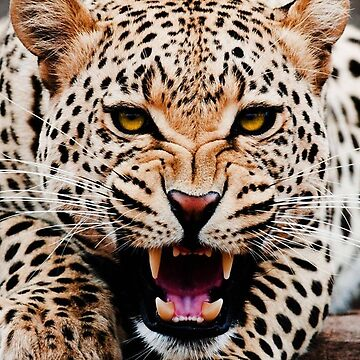 Cheetah Photo, Big Cat Lover by EarthlyIndigo