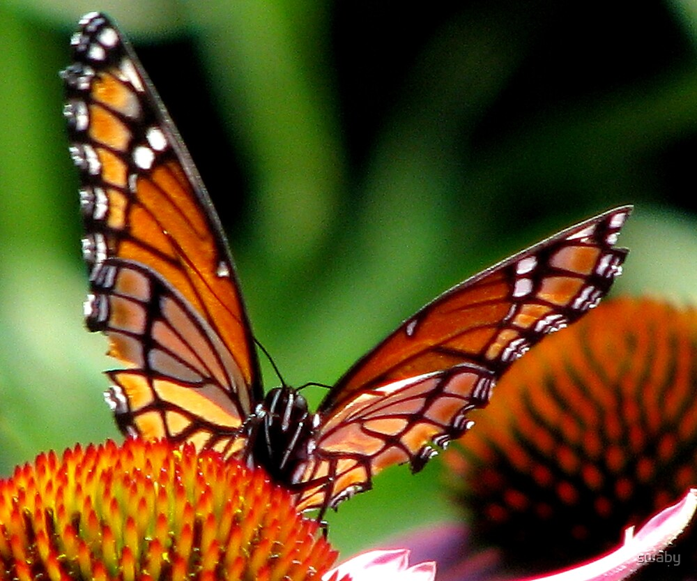 Monarch On Cones by swaby