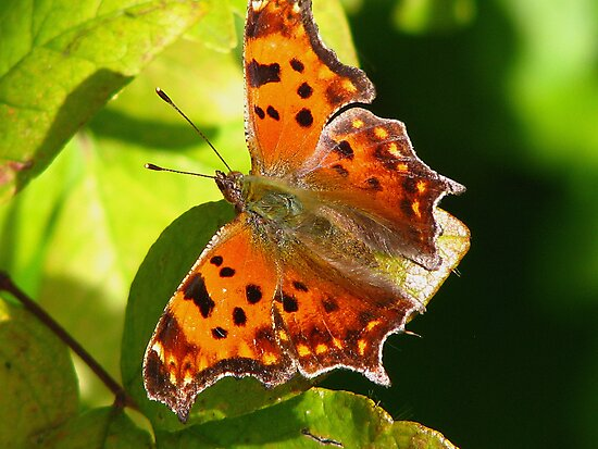 Green Comma Too! by swaby