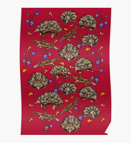 monotremes and wildflowers on cardinal Poster