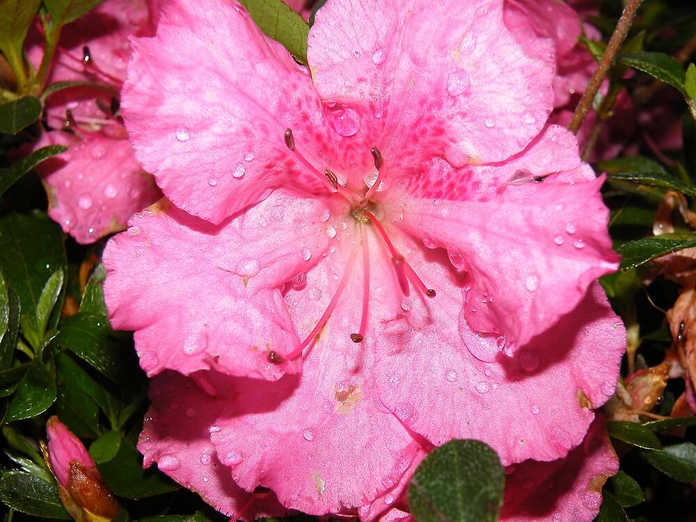 Pink Rain Flower by Jessica Pior