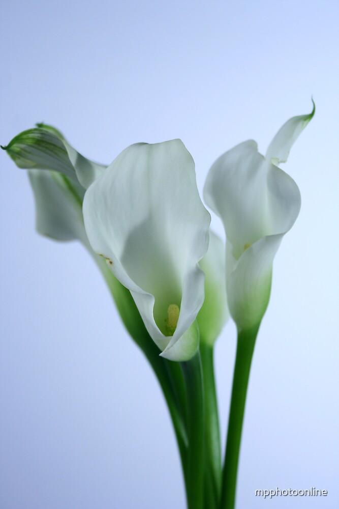 Lilies, #3 - Color Verison by mpphotoonline