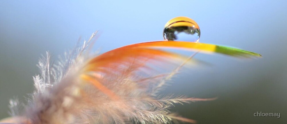 backyard in a drop on a feather! by chloemay