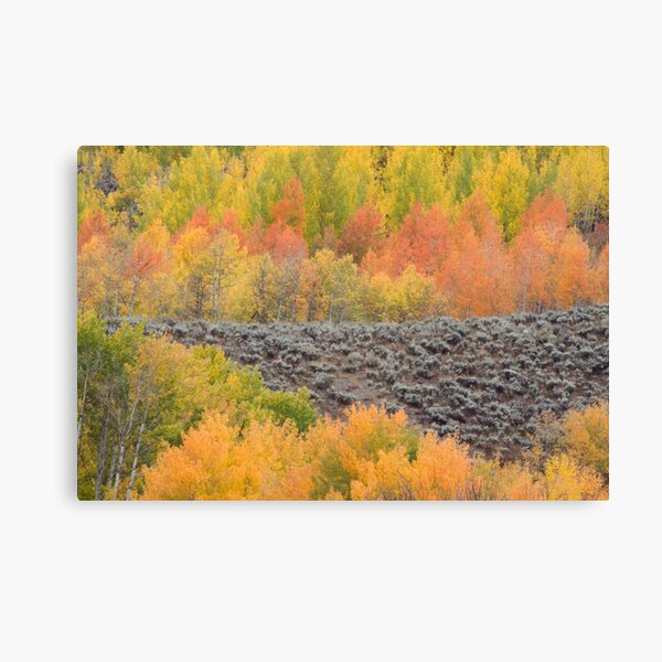 Bands of Fall Color Canvas Print