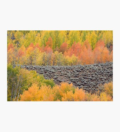 Bands of Fall Color Photographic Print