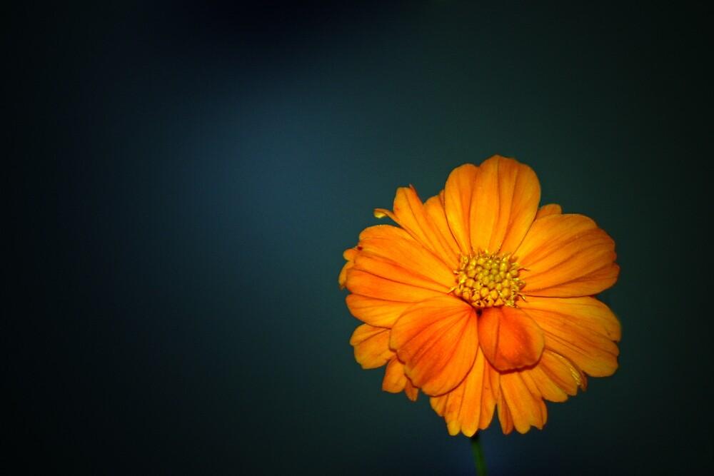 Fall Fair Flower by Brian104