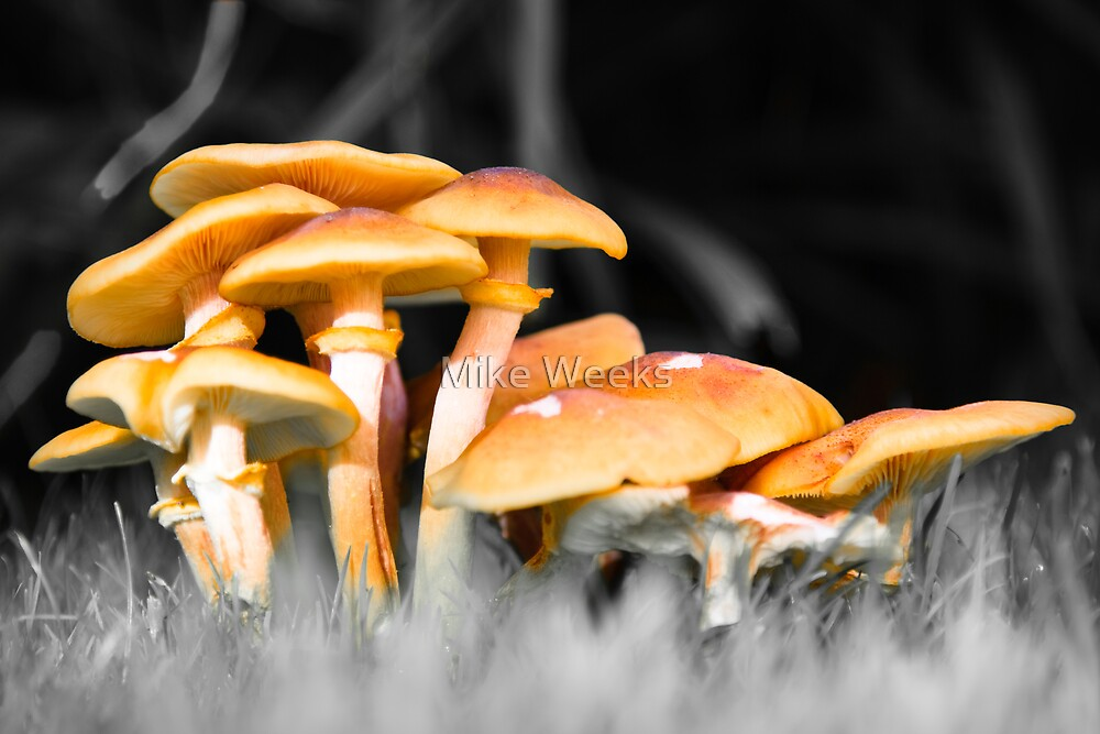 Toadstool or Mushroom? by Mike Weeks