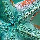 Underneath the Star by Rick Grundy