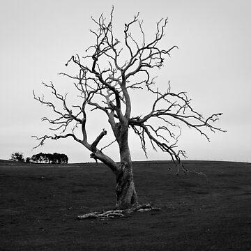 Skeletal by Evolve