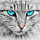 Grey Cat with Blue Eyes by Leon Woods