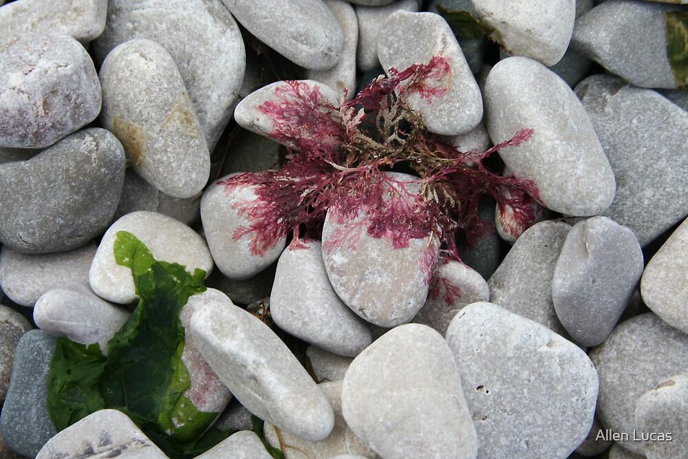 Llandudno Beach Treasures, Wales by Allen Lucas