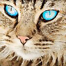 Tabby Cat with Blue Eyes by Leon Woods