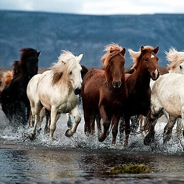 Horses Running Through Water by Staytrendy